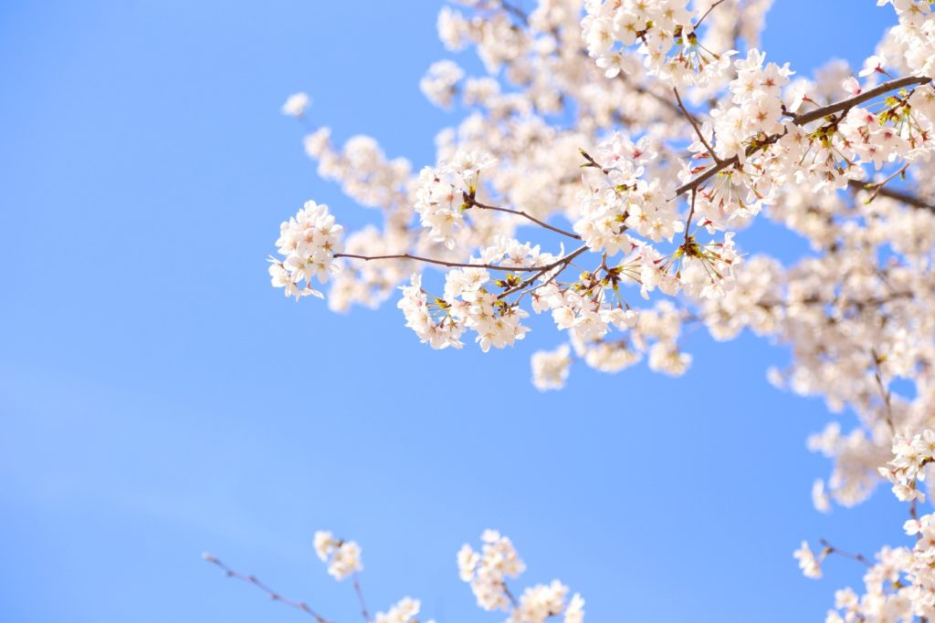 春が始まりますね〜♪