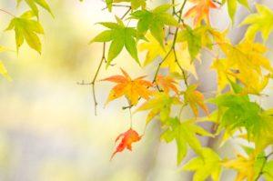 秋の訪れ♩