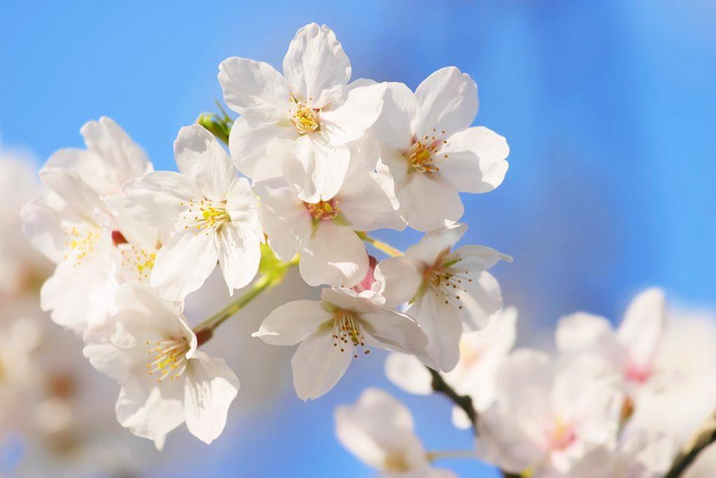 ぽかぽかと春爛漫の季節となりました。